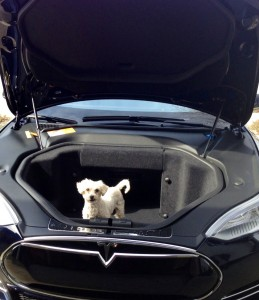 Hey! This car is puppy powered!